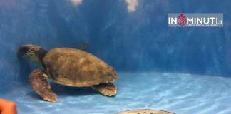 stabulario del Centro di Primo Soccorso per le tartarughe marine.