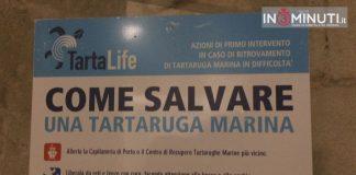 S.o.S. tartarughe marine: cosa fare ed a chi rivolgersi in caso di avvistamenti di esemplari in difficoltà